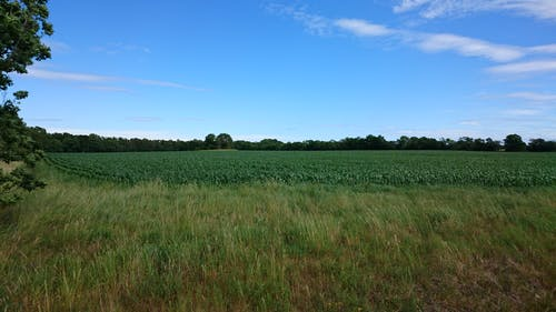 Kostnadsfri bild av blå himmel, sommar