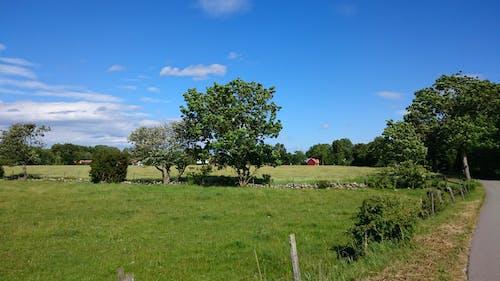 Kostnadsfri bild av solig, sommar, staket, träd