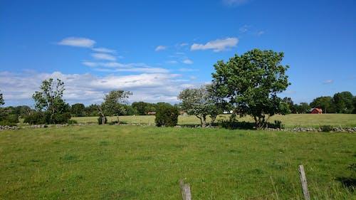 Kostnadsfri bild av countrytside, sommar, träd