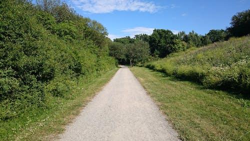 Kostnadsfri bild av blå himmel, gångväg, grönt gräs