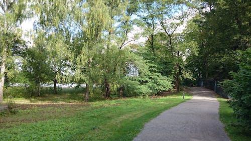 Immagine gratuita di cielo azzurro, sentiero, vegetazione