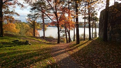 Immagine gratuita di alberi, autum, cielo azzurro, luce del sole