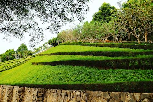 ağaçlar, alan, büyüme, çim içeren Ücretsiz stok fotoğraf