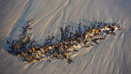 Gratis stockfoto met strand, zand, zeewier