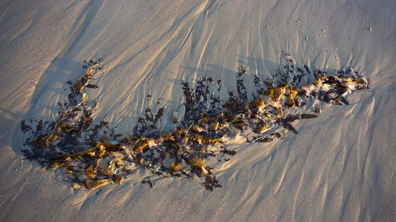 Free stock photo of beach, sand, seaweed