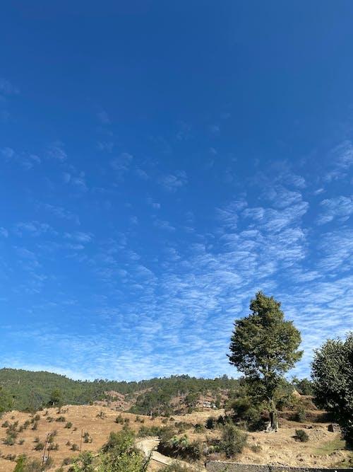 Gratis stockfoto met berg, blauwe lucht, boom