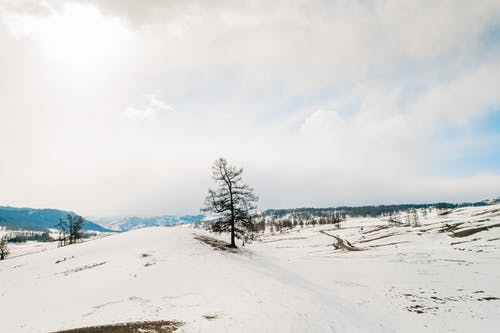 Snow Covered Field With Trees Under White Clouds and Blue Sky