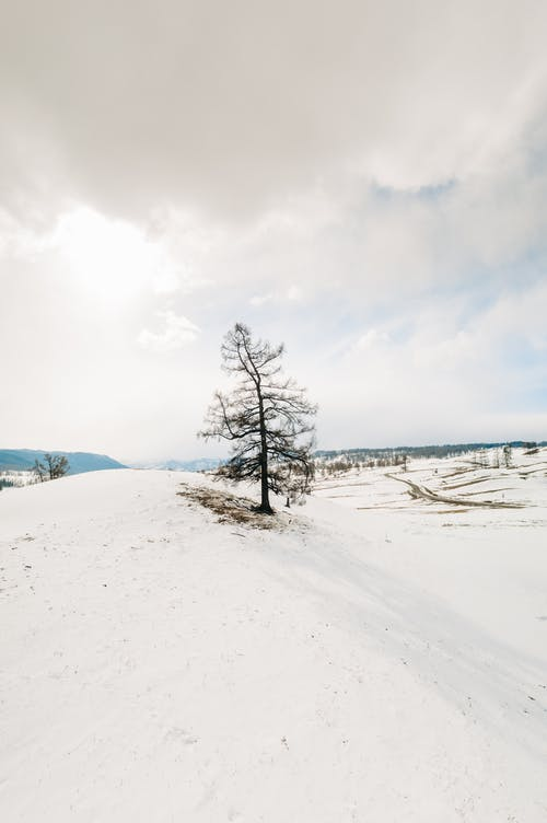 Snow Covered Field and Trees Under White Clouds and Blue Sky