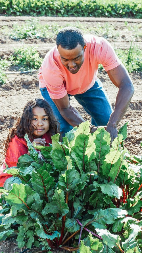 African American male horticulturist with girl against beetroot plant with lush foliage on sunny day