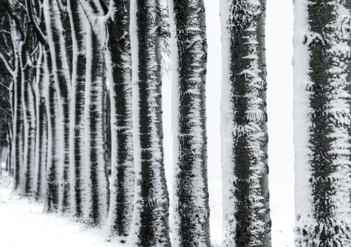 Photography of Trees during Winter