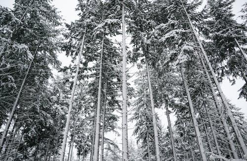 Бесплатное стоковое фото с белый, ветви, высокий