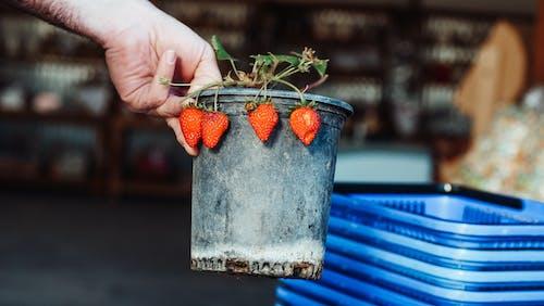 Fotos de stock gratuitas de en conserva, fresas, Fruta