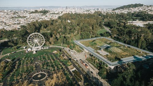 Aerial View of Green Trees and White Ferris Wheel