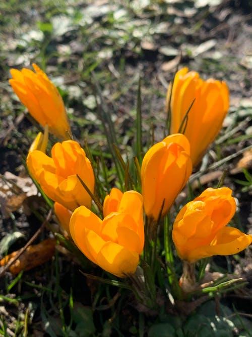 açık hava, bitki örtüsü, büyüme içeren Ücretsiz stok fotoğraf