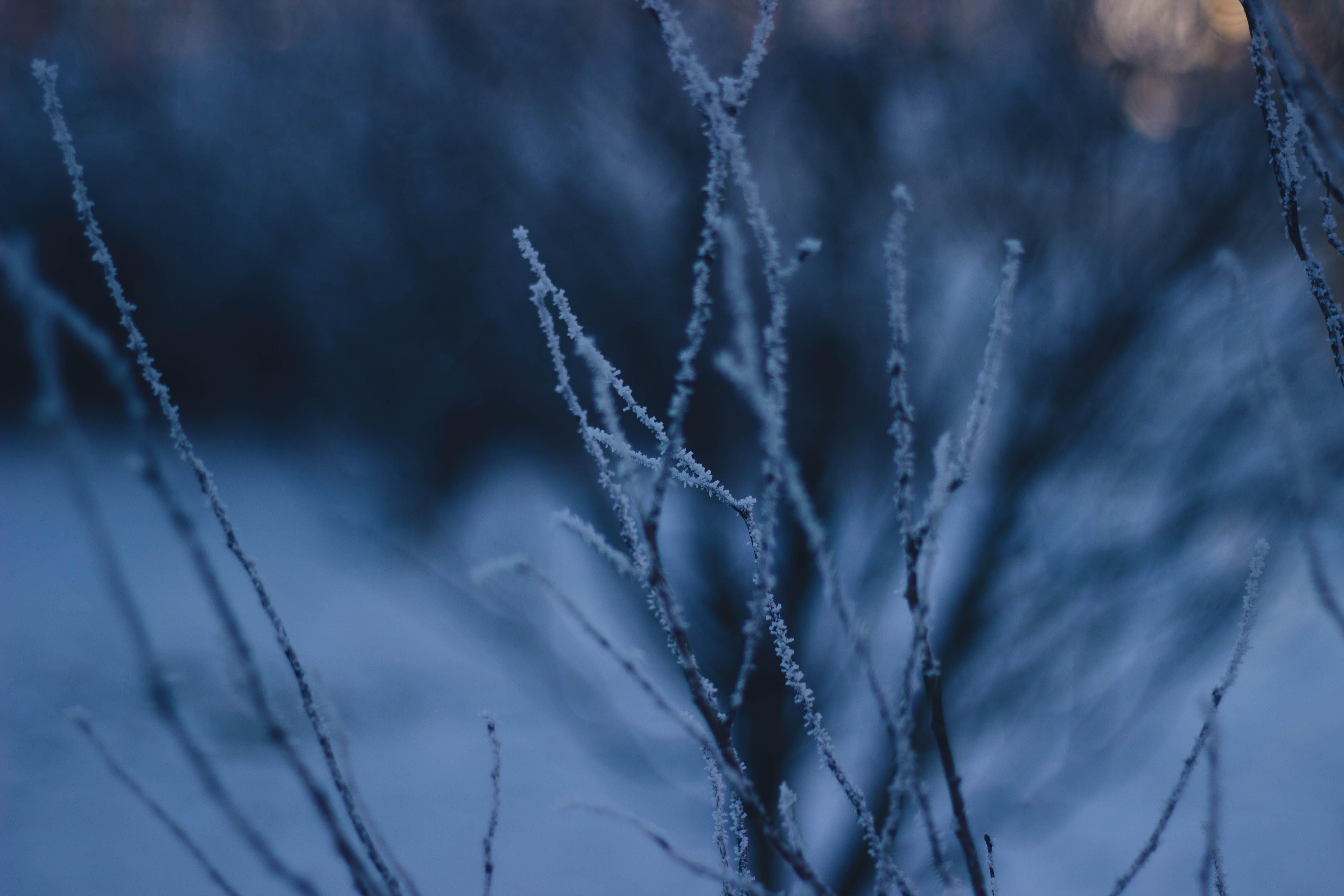 Základová fotografie zdarma na téma mráz, rýma, tmavý, větvičky