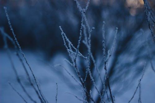 Gratis stockfoto met bevroren, donker, kou, takjes