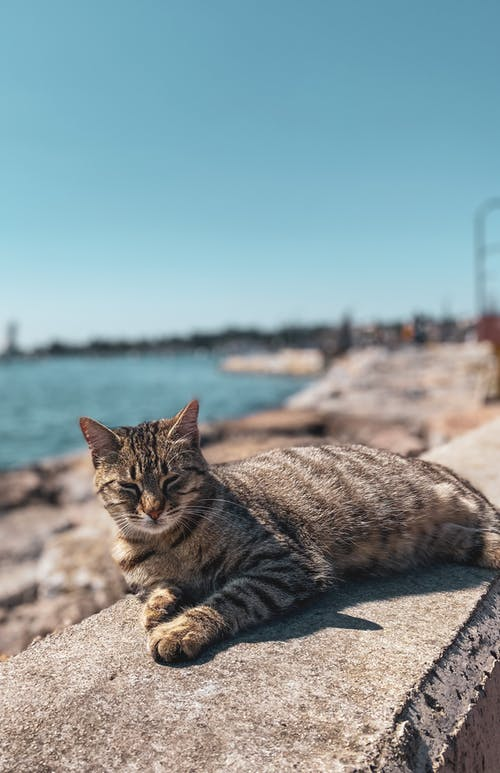 Close-Up Shot of a Tabby Cat Lying Down Outside