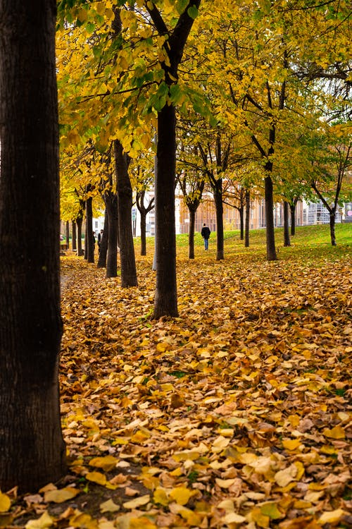 Trees in autumnal park with fallen leaves
