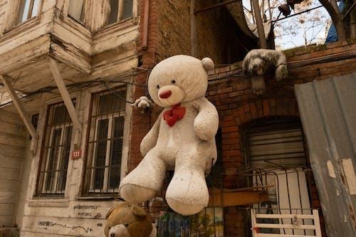 A Stuffed Animal Hanged on a Wall