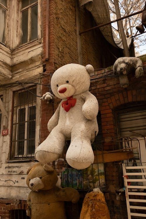 คลังภาพถ่ายฟรี ของ กลางแจ้ง, ของเล่นตุ๊กตา, ตุ๊กตาสัตว์