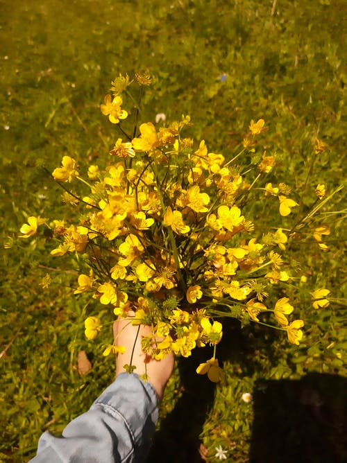Close-Up Shot of a Person Holding Yellow Flowers