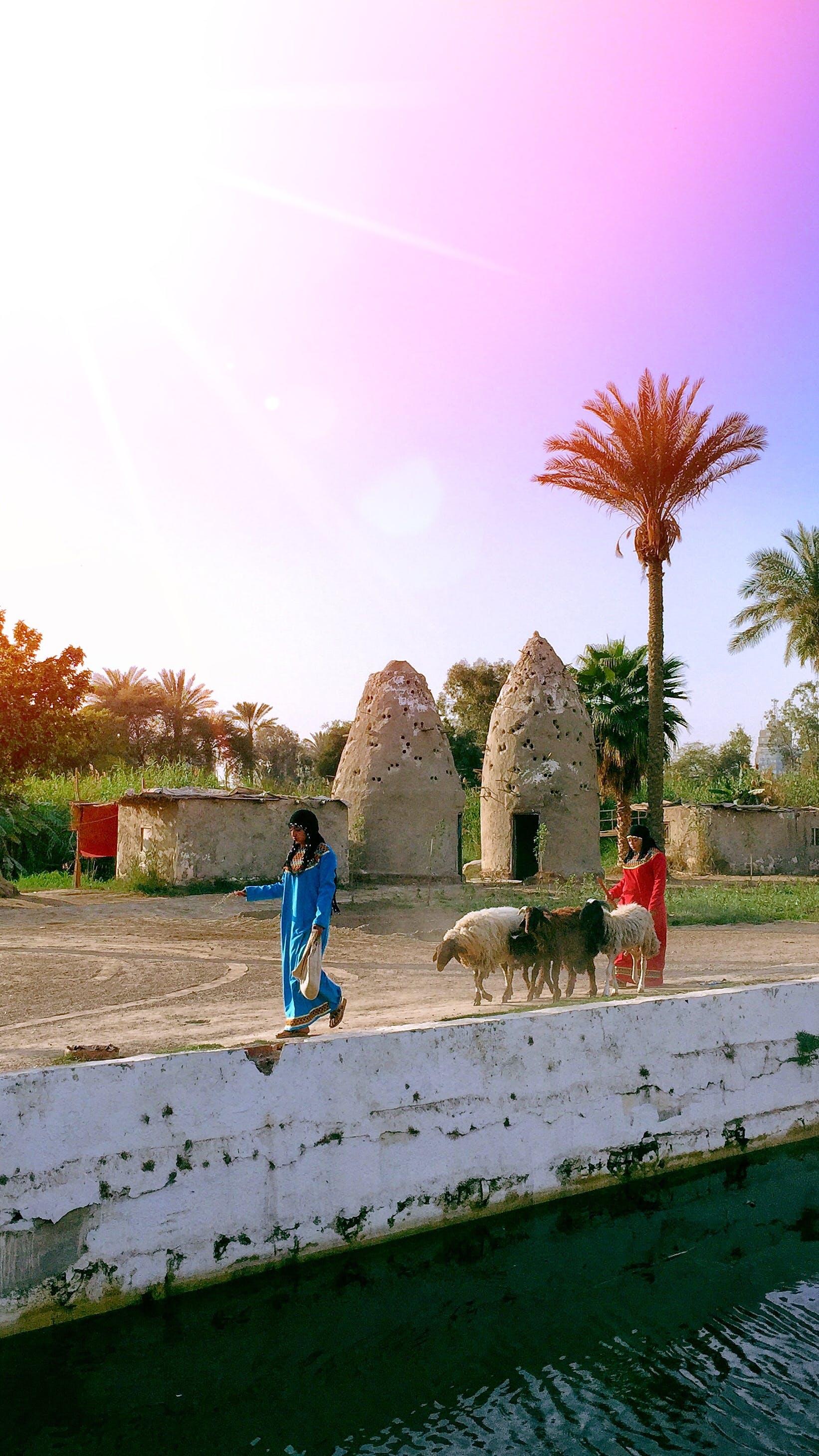 Free stock photo of arab, cairo, city, city life