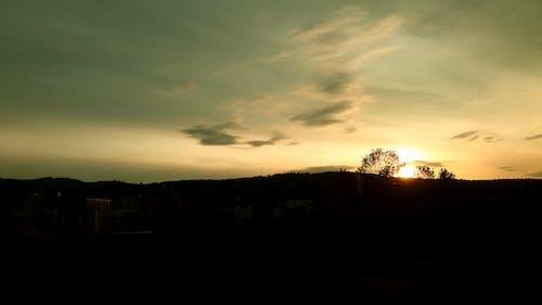 傍晚的太陽, 分公司, 分支機構, 地平線 的 免费素材照片