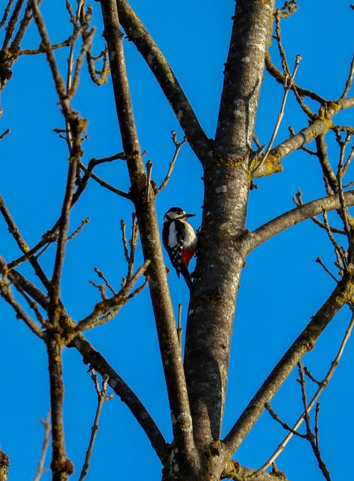A Woodpecker Perched on a Tree