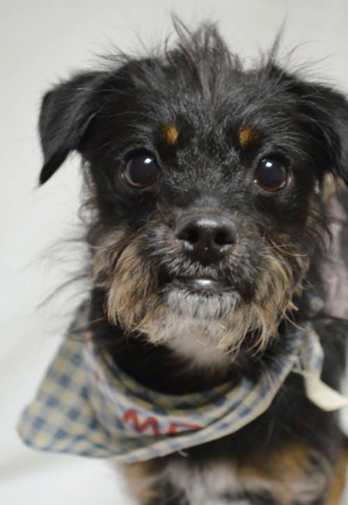 Free stock photo of animal portrait, dog, doggy
