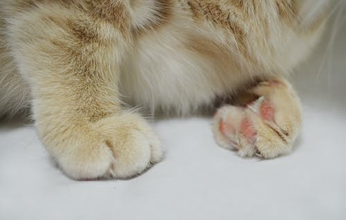 Free stock photo of animals, cat, cat paws