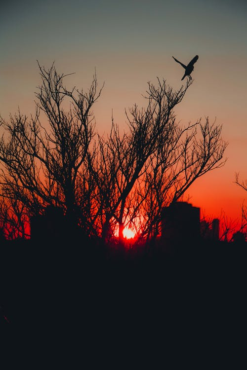 Silhouette of Bare Trees during Sunset