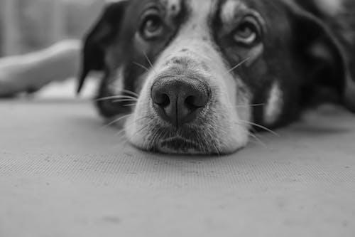 Grayscale Photo of Dog Lying on Floor