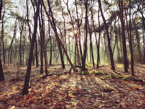 Fotos de stock gratuitas de arboles, bosque, encantador, místico