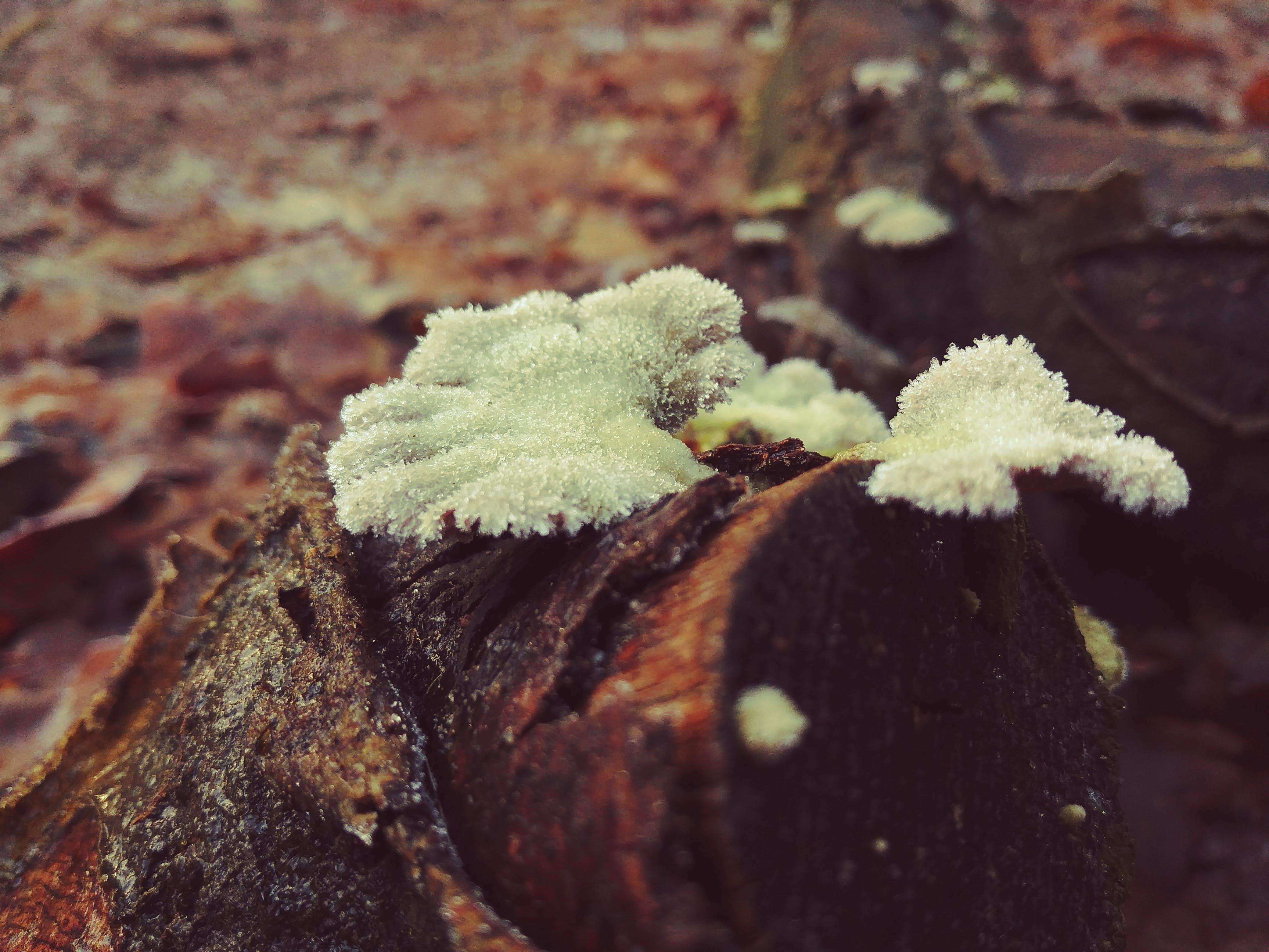 그림자, 매혹적인, 숲, 신비로운의 무료 스톡 사진