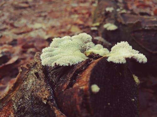 Fotos de stock gratuitas de arboles, bosque, encantador, foto macro