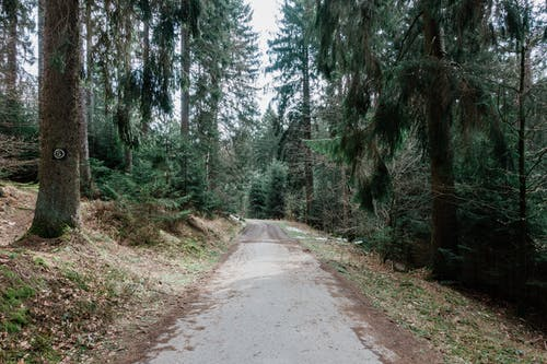 Immagine gratuita di @all'aperto, alberi, albero