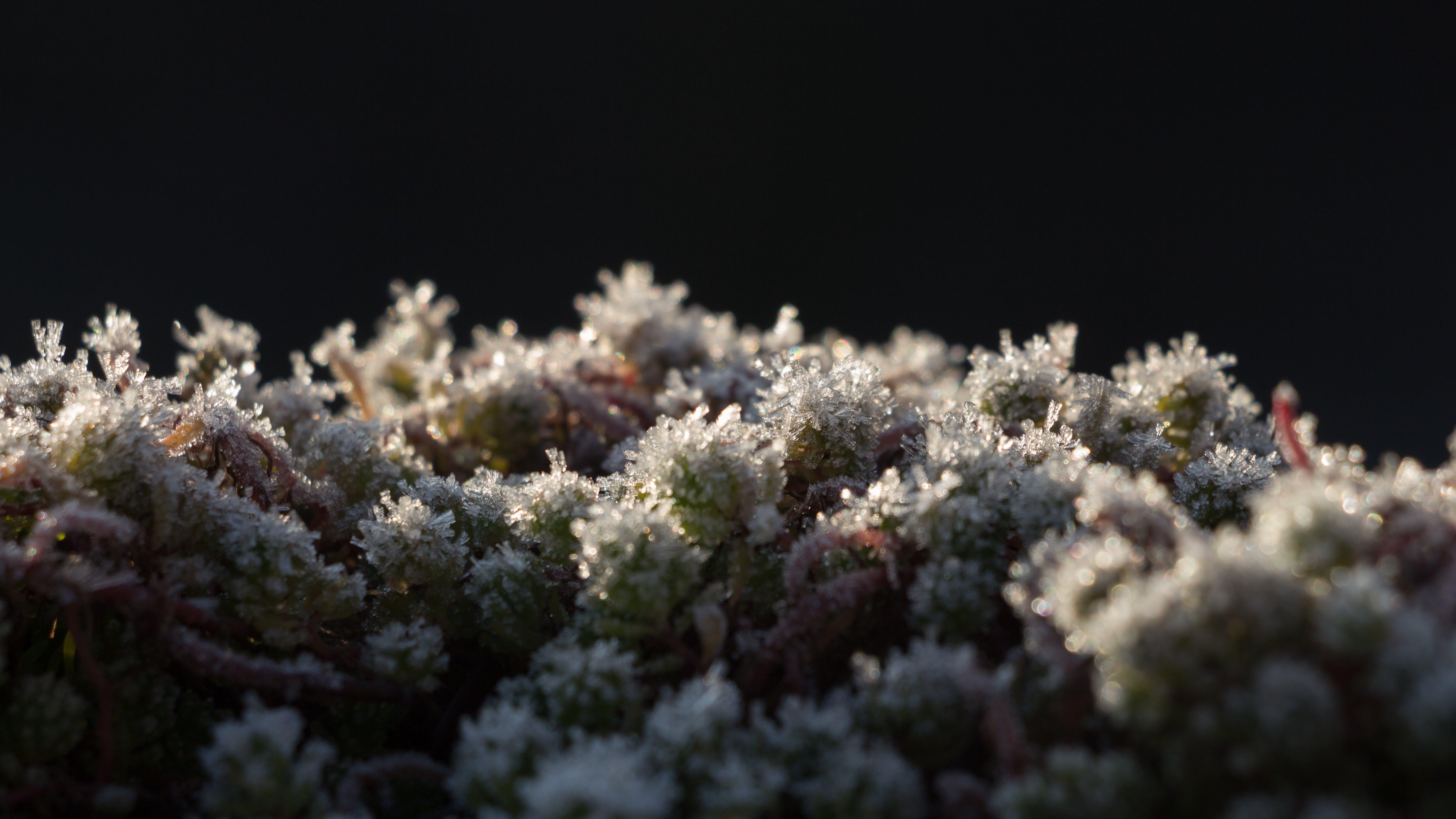 bitkiler, bulanıklık, buz, buz tutmuş içeren Ücretsiz stok fotoğraf
