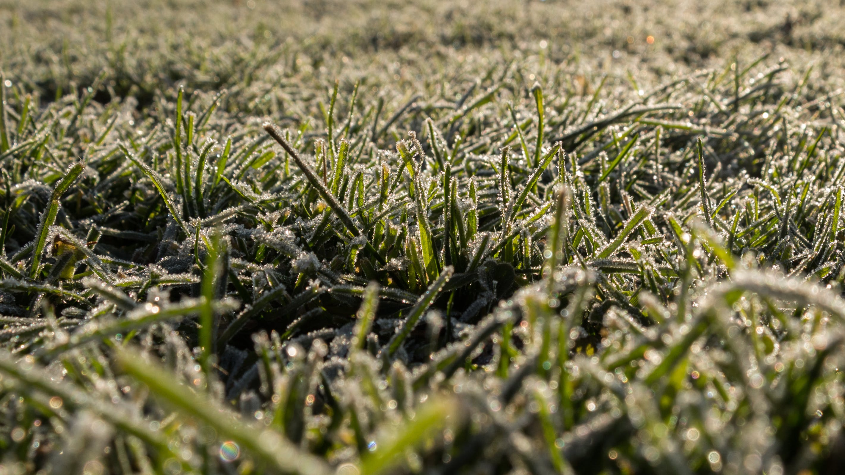 Gratis stockfoto met aarde, close-up, gras, groei