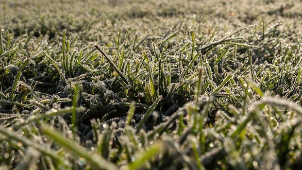 Kostenloses Stock Foto zu kalt, landschaft, feld, gras