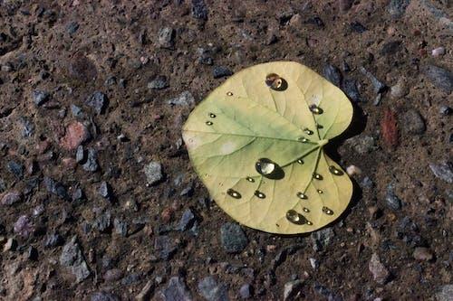 Gratis lagerfoto af grønt blad, kontrast, tekstur, vanddråbe