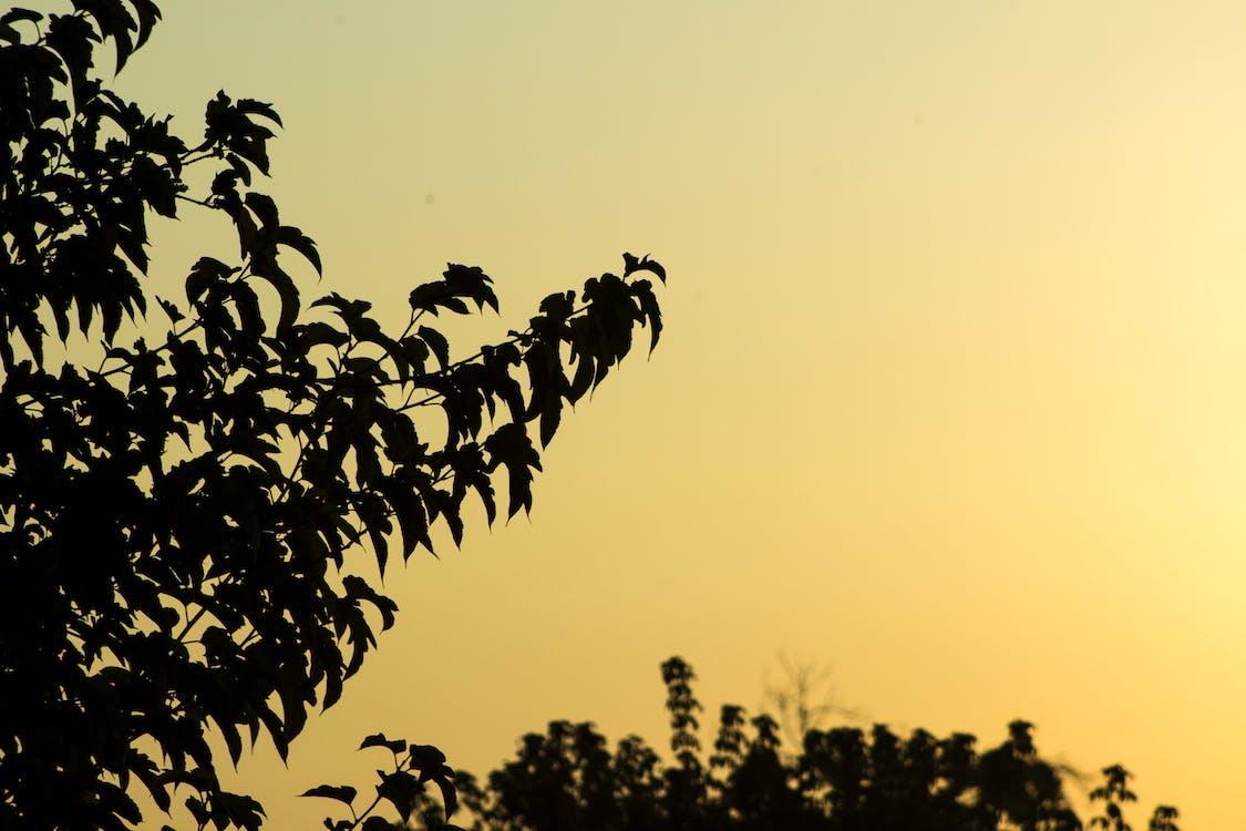 bomen, geel, goud