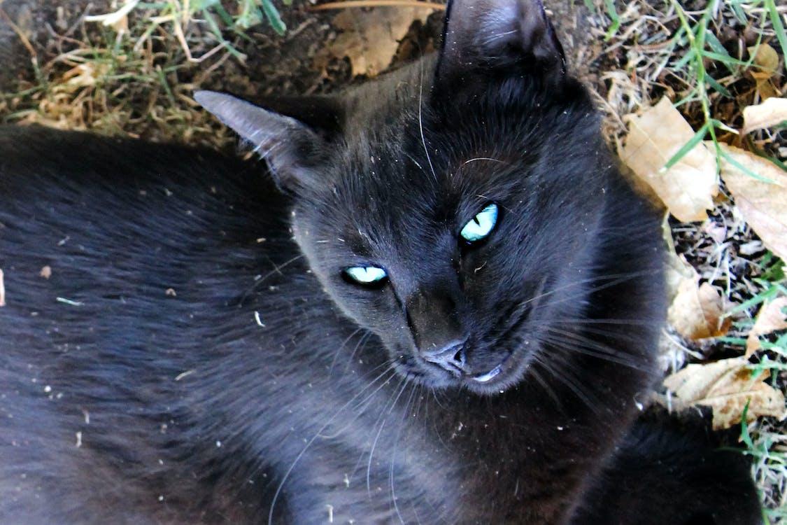 blå øyne, dyrefotografering, fotografi