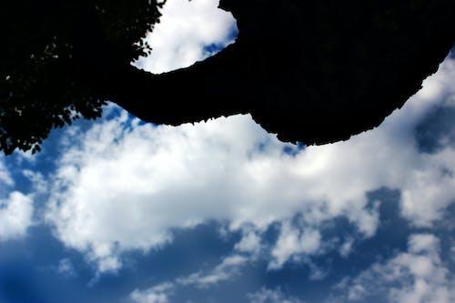 Fotos de stock gratuitas de cielo, naturaleza, nubes, sombra de arbol