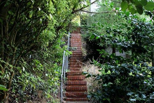Fotos de stock gratuitas de arboles, escaleras, fotografía, ladrillo
