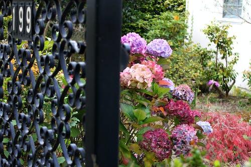 Fotos de stock gratuitas de 199, flores bonitas, san fran, sf