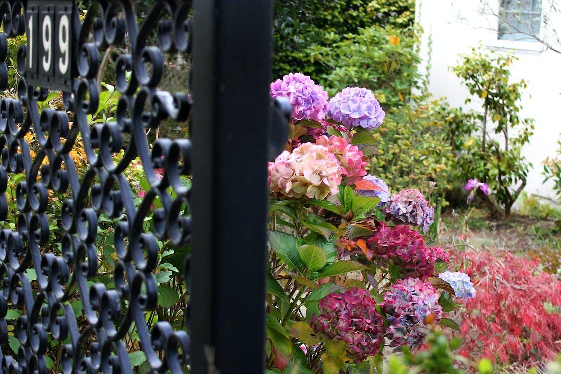 199, brána, krásné květiny