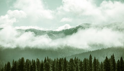 Free stock photo of clouds, fog, forest, landscape