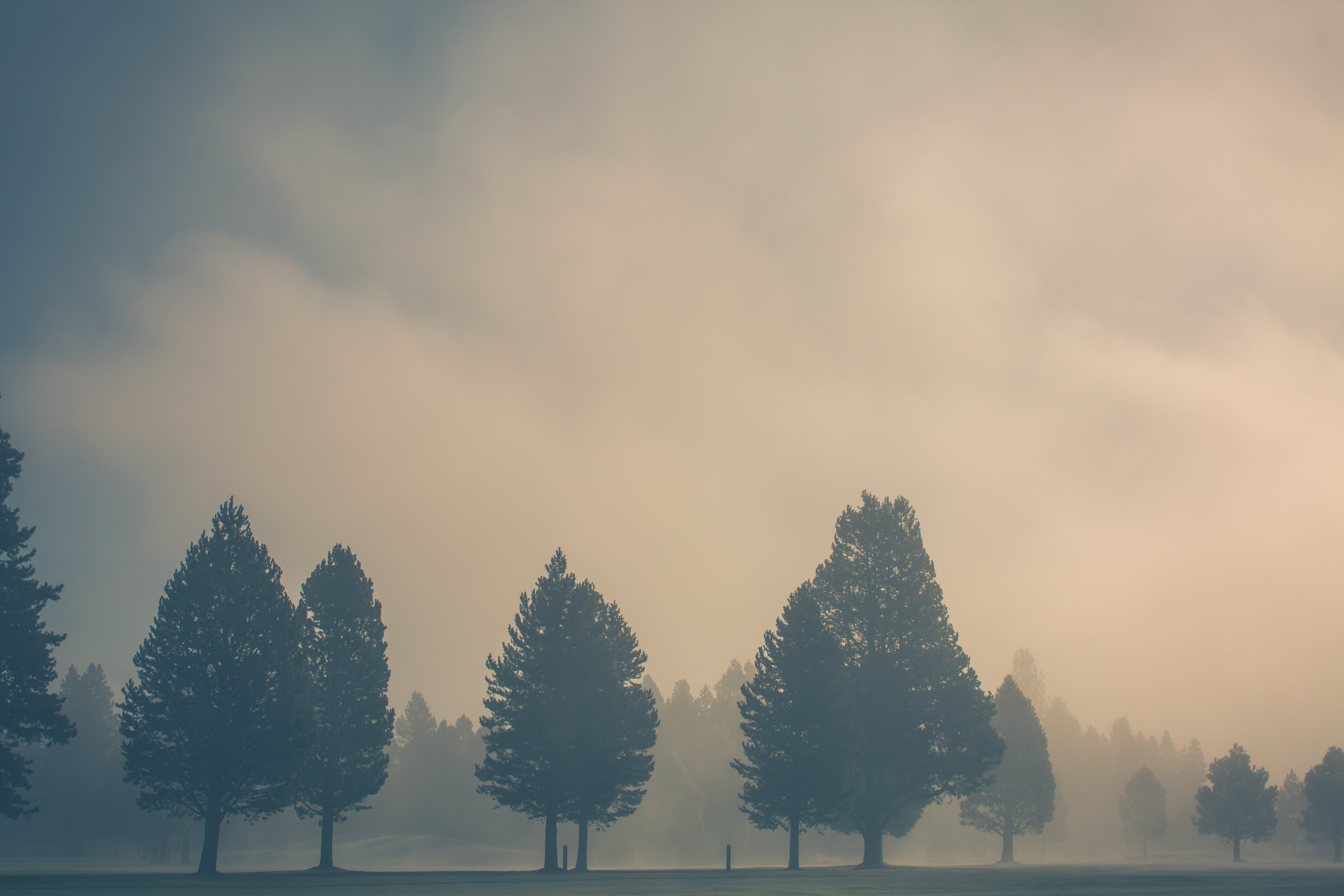 of clouds, early morning, fog, forest