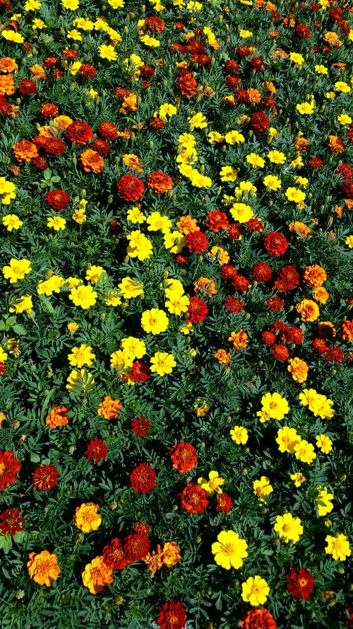 一束花, 夏天, 夏天的花, 紅色 的 免费素材照片