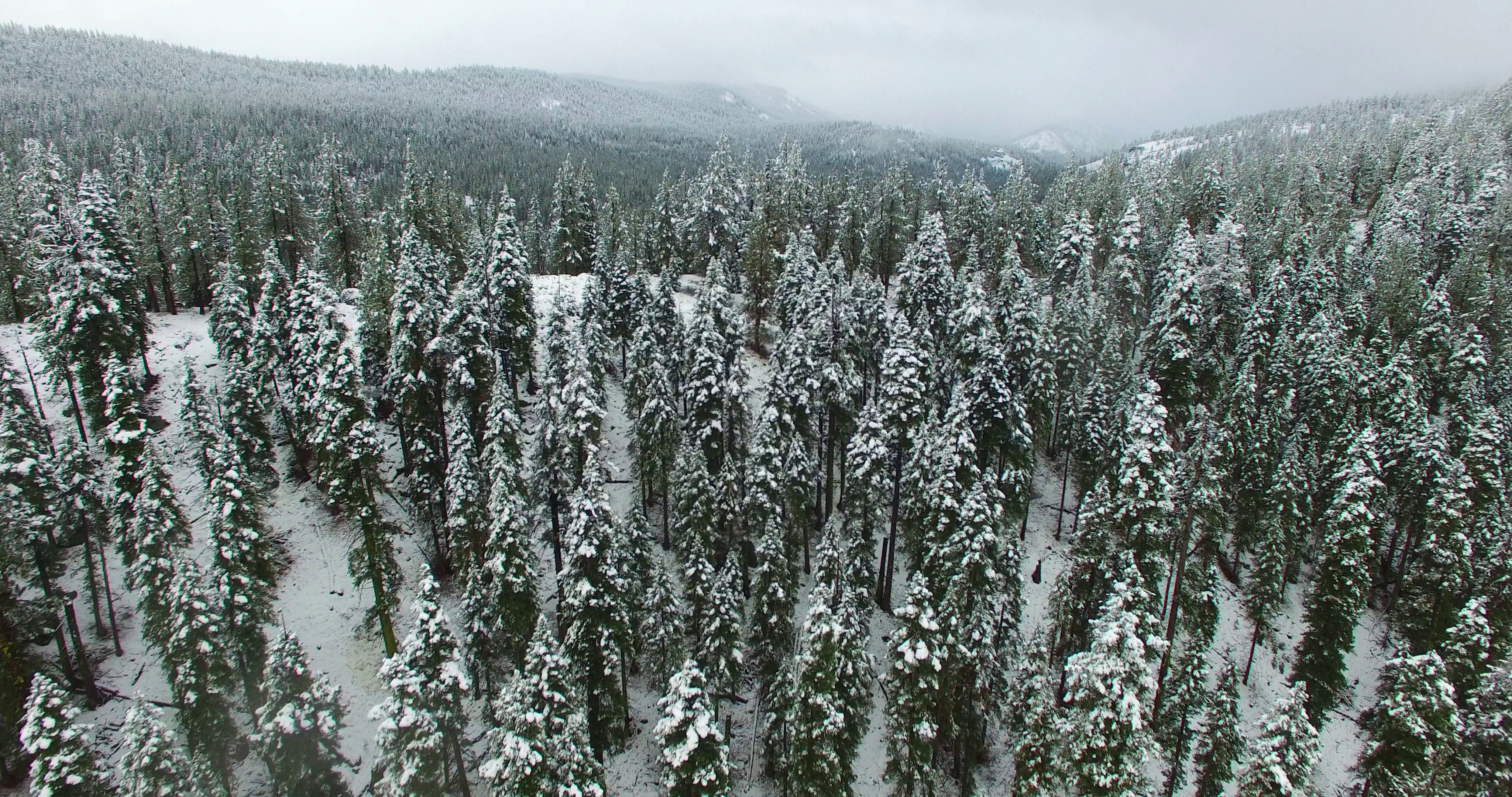 Aerial Photography of Forest during Winter